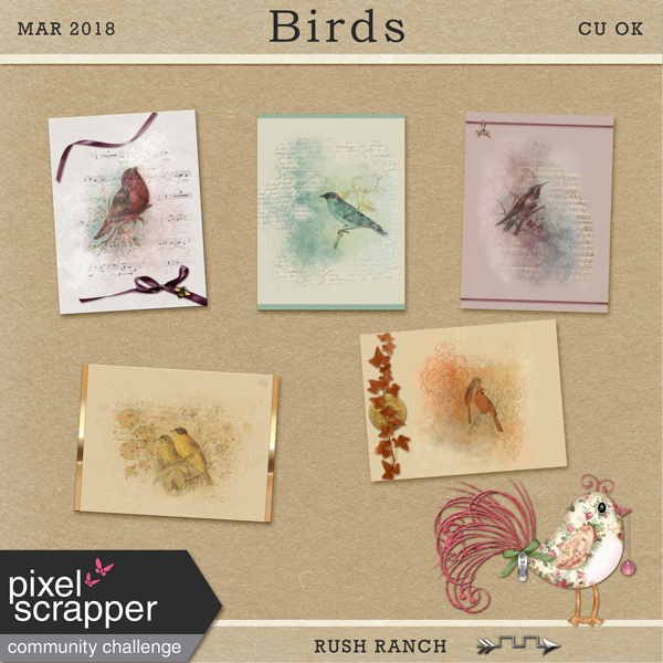 PSMar2018_spring-birds_cu